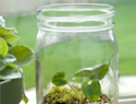 How to assemble a terrarium