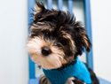 How to Stop Your Puppy From Chewing & More