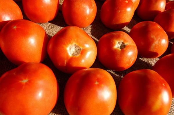Juicy, sweet jersey tomatoes