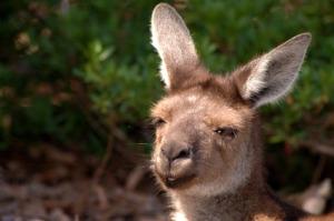 Wine, kangaroos and adventure