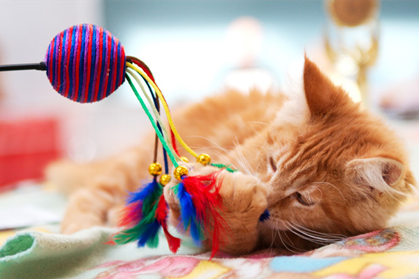 Kitten Playing with Toys