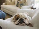 Dog breeds that are perfect for really lazy people