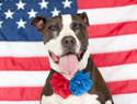 11 patriotic dogs that will awaken your inner Yankee