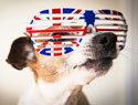 Pet names inspired by Brit coms