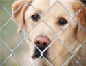Top 5 reasons to adopt a dog from an animal shelter or rescue group 
