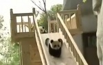 The impossibly adorable panda slide (VIDEO)