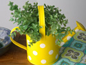 The perfect porch decoration: Watering can flowerpot