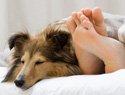 The truth about sleeping with your dog