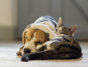 12 Dog Breeds That Actually Get Along Great With Cats