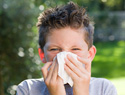 Top 10 pets for kids with allergies