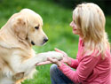 Top 10 tips from the world's best dog trainers