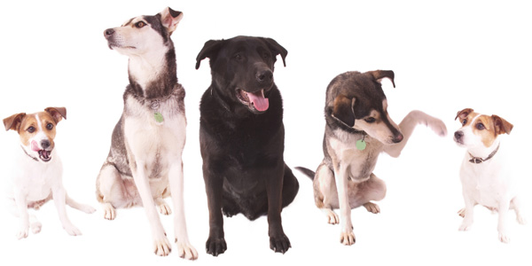 isolated pack of dogs
