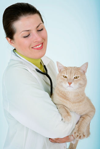 Vet with Cat