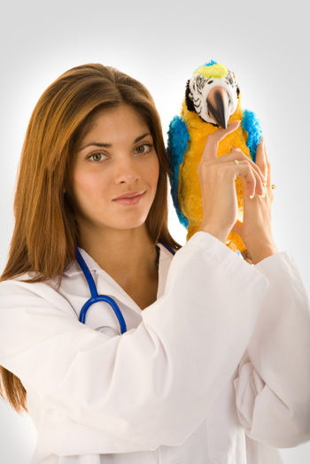 Vet with Parrot