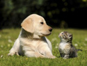Cats and dogs do not follow the same parenting rules (VIDEO)
