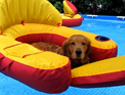 Owner finds dogs lounging on pool floats (VIDEO)