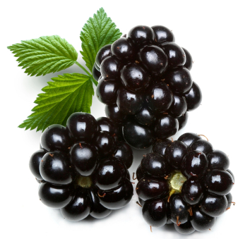 high fiber fruits cassis fruit