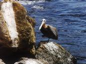 galapagos islands ,eco adventure travel