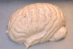 Igor's Pickled Brain Halloween Gelatin Mold Recipe