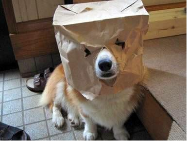 Homemade bag mask for dog