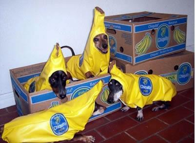 Chiquita banana dogs