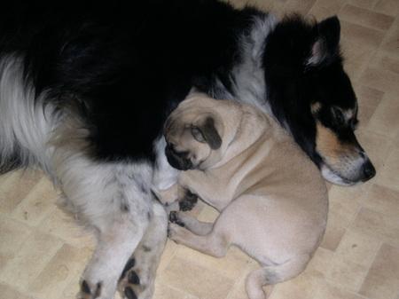 Big buddy & little buddy