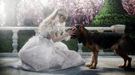 Anne Hathaway & The Bloodhound