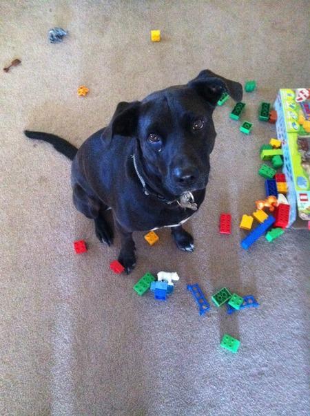 The Bundy's dog