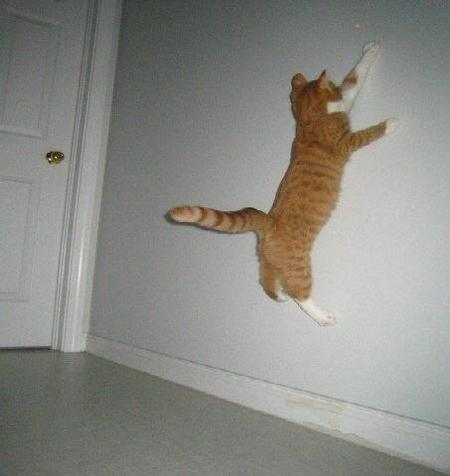 Jumping kitty