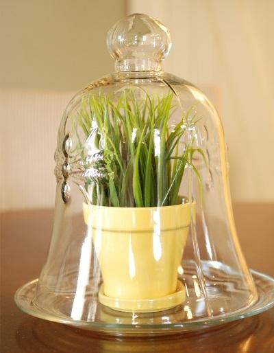 Snazzy wheatgrass