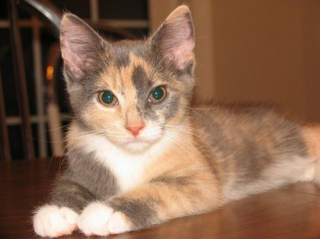 Little patches