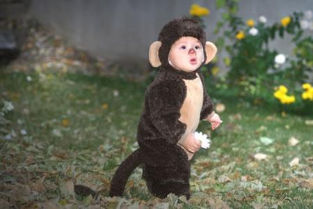 Cute l'il monkey