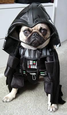 Darth Vader pug