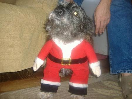 Doggie Claus