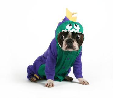 It's fun to play doggie dress-up