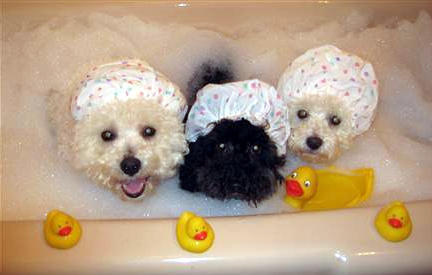 Dogs in a bathtub