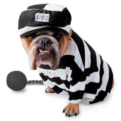 Prisoner Costume for Dogs