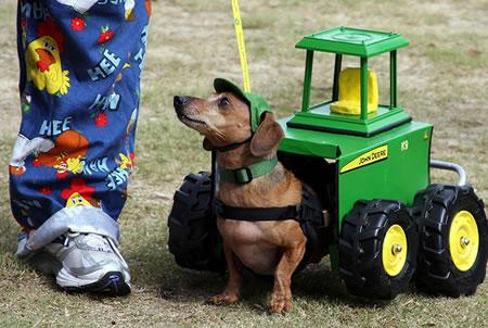 John Dog, not Deere.