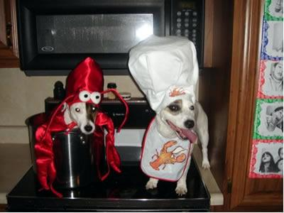 Lobster and chef dog
