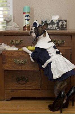Maid dog