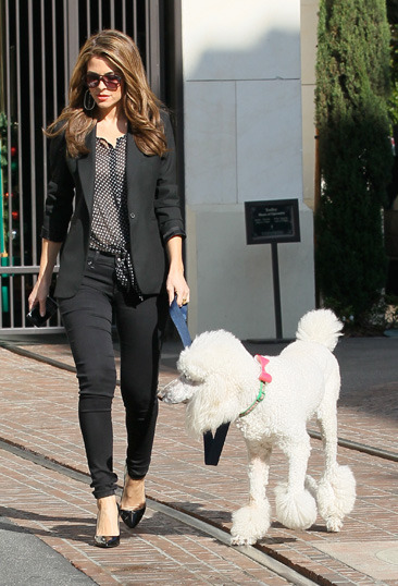 Maria Menounos walking her poodle at The Grove
