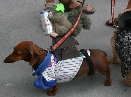 We have no idea what this Cubs-inspired costume is.