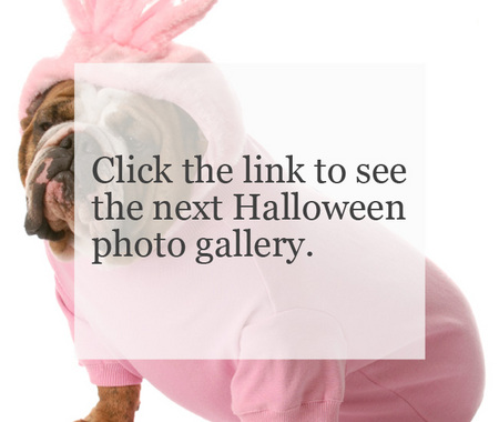 More Halloween photo galleries