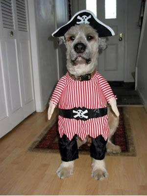 Pirate dog