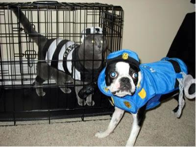 Bandit cat and police officer dog