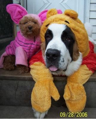 Pooh Bear and Piglet dogs