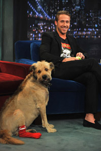 Ryan Gosling and his dog George on Late Night With Jimmy Fallon