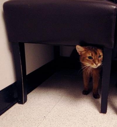 Rubbing Against Furniture