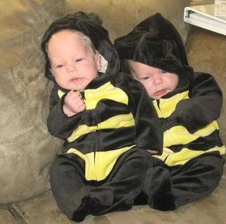 Bumble bees