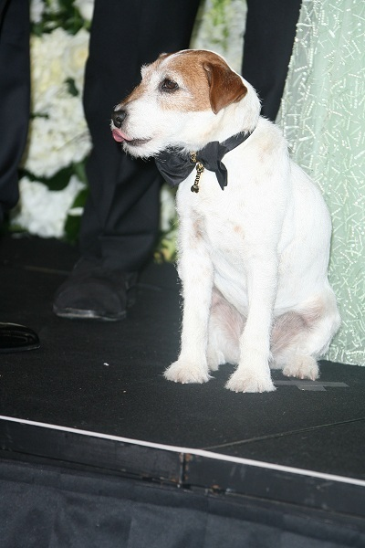 Uggie joins The Artist cast